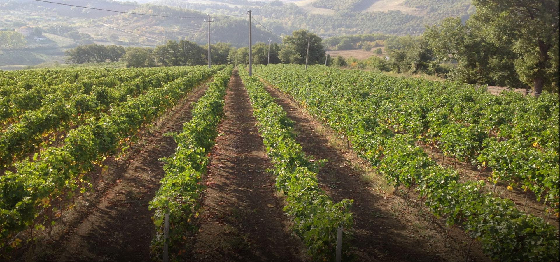Le Alte Vigne